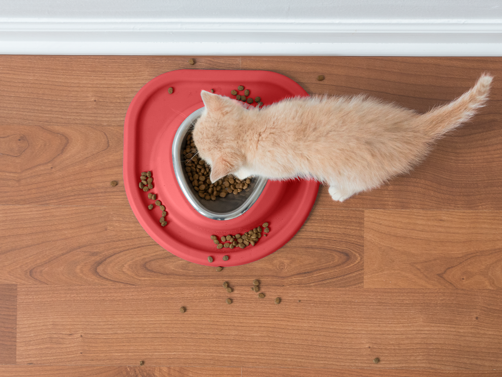 Tabby_kitten_Eating_singlebowl_red_singlelow