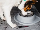 dog drinking from Single Low Pet Feeding System BY WEATHERTECH