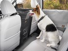 Dog_in_the_back_seat_of_a_car_with_the_pet_partition_installed. BY WEATHERTECH