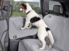dog standing on Door Protector looking out window BY WEATHERTECH
