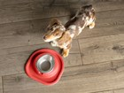 Dog with red Single Low Pet Feeding System BY WEATHERTECH