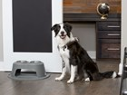 dog standing next to a double high feeding system BY WEATHERTECH