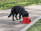 Dog using red Single High Feeding System outside.  BY WEATHERTECH