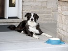 Dog drinking from WeatherTech Feeding System. BY WEATHERTECH