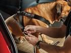 Large dog buckled in with Pet Safety Harness. BY WEATHERTECH