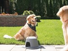 Dog using the Single High Feeding System outside.  BY WEATHERTECH