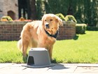Dogs using the Single High Feeding System outside BY WEATHERTECH