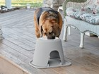 Senior dog on eating from single high system. BY WEATHERTECH