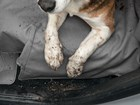 Seat_Protector_Duke_Closeup_Dirty BY WEATHERTECH
