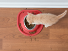 cat eating from red Single Low Pet Feeding System BY WEATHERTECH