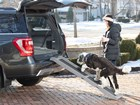 Dog walking up Pet Ramp in the winter. BY WEATHERTECH