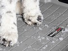 Close up of a dogs snowy paws on a Cargo Liner. BY WEATHERTECH