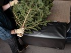 Xmas_Tree_Cargoliner_guy_2000X1500 BY WEATHERTECH