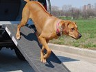 petstep dog brown walking down BY WEATHERTECH