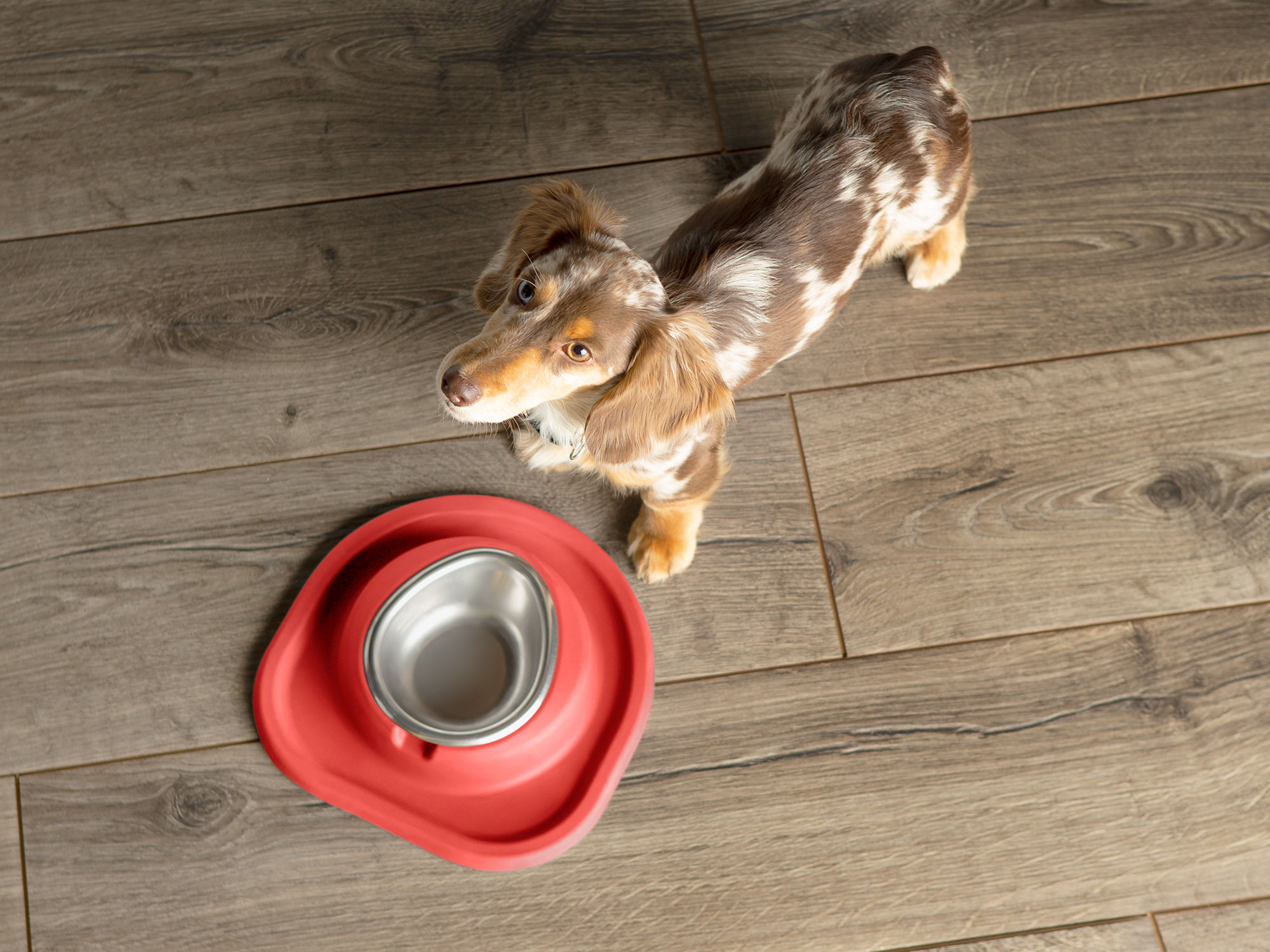 WeatherTech dog bowls are available in all different sizes for all pooches.