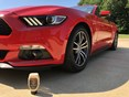 2017 Ford Mustang TechCare<sup>®</sup>  Carnauba Gel Wax