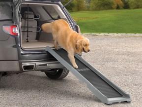 Loopplank voor huisdieren