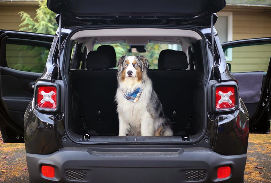 Dog in cargo area.