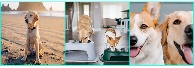 Ava and Aspen using the WeatherTech pet feeding system.