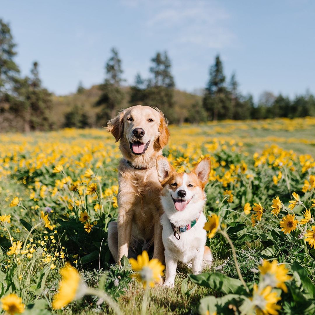 Ava and Aspen in a field of flowers.