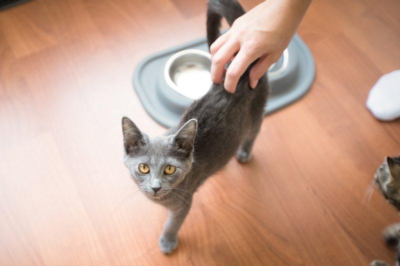 Cat_Body_Language