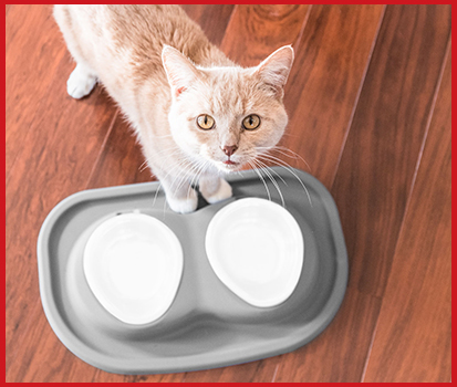 Photograph of a cat waiting for food to be placed in a double pet single feeding system.