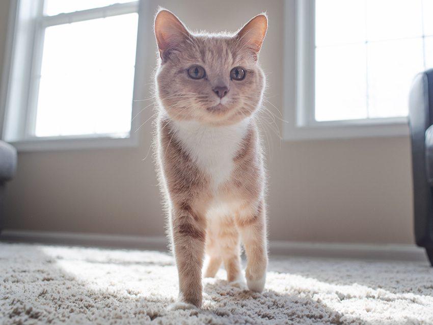 Do_Cats_Always_Land_On_Their_Feet