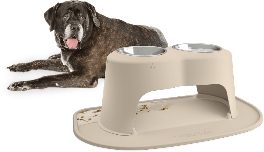 Dog behind Feeding System with Mess Contained