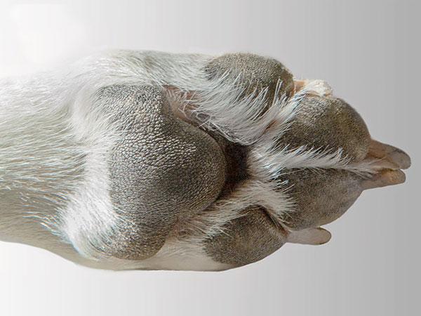 Tick on Dog