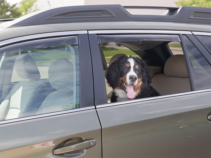 Dog_in_Window_of_Car