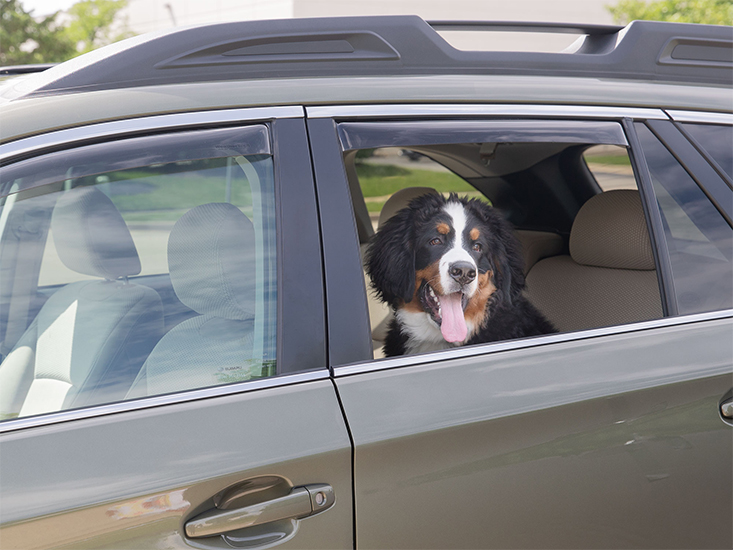 Popular Products This Spring for Your Vehicle and Home