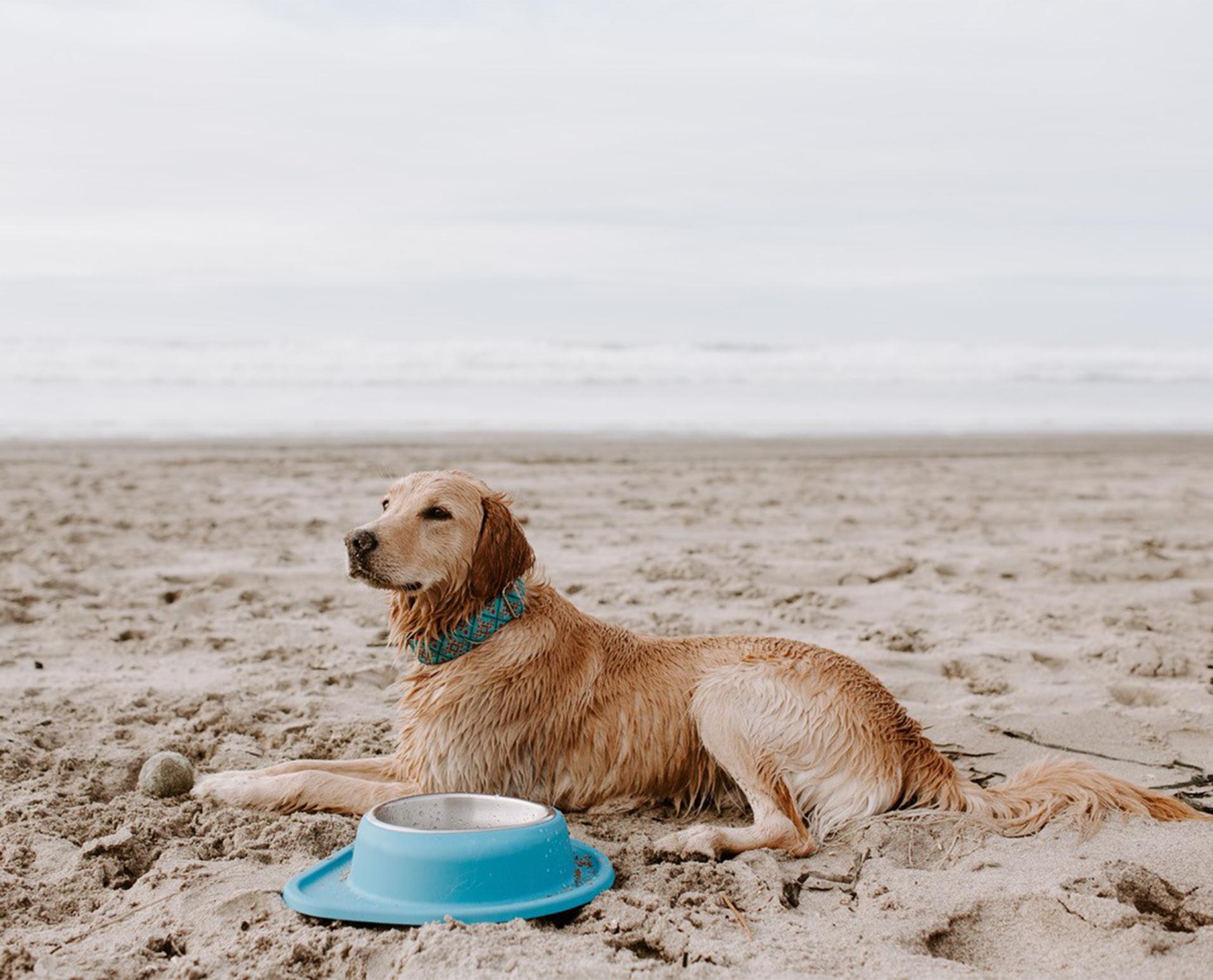 Dog_on_beach