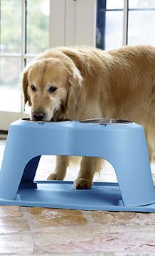 David MacNeil's golden retriever, 'Scout,' eating from a blue pet feeding system