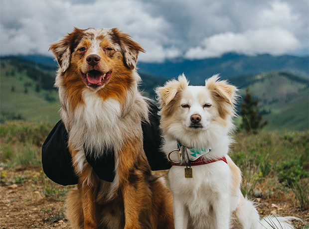 Tackling Trails with Marley and Cooper