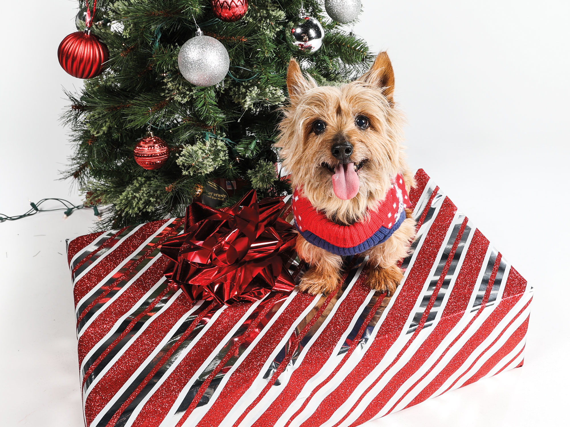 Pet safety tips during the holidays