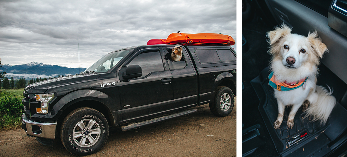 Dogs using WeatherTech Products