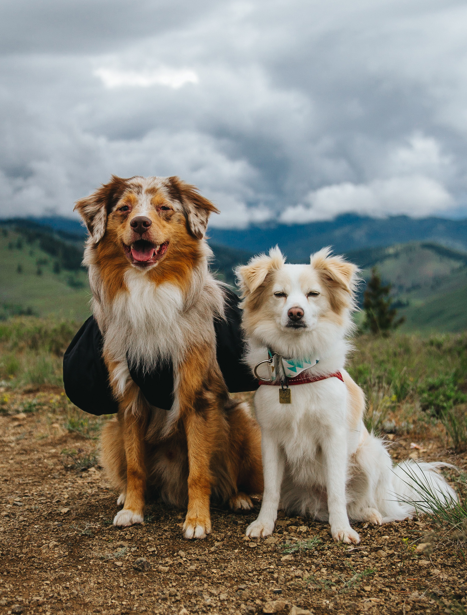 Dogs on mountainside