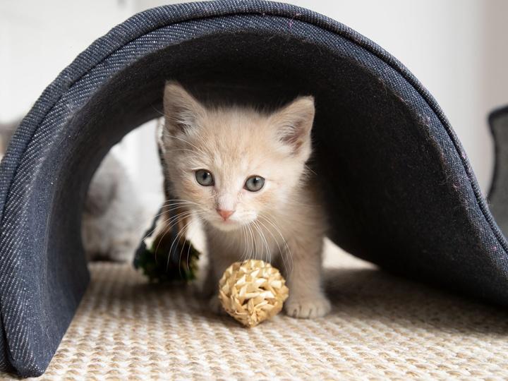 Kitten_Diarrhea_Article