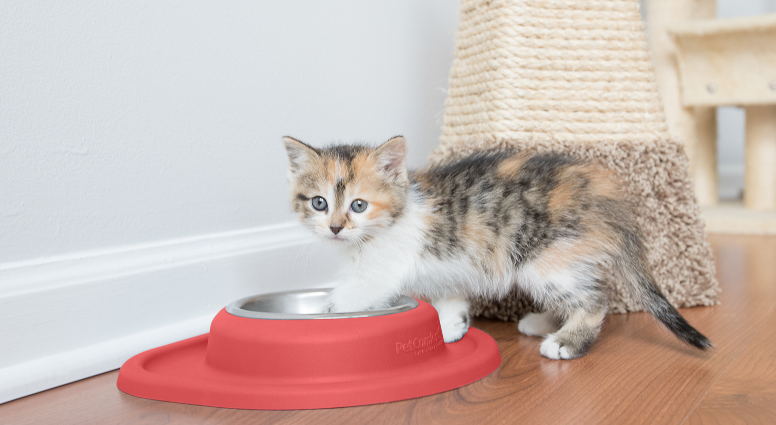 Kitten Standing in Bowl