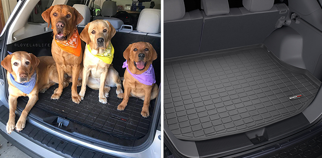 Dogs and a Cargo Liner