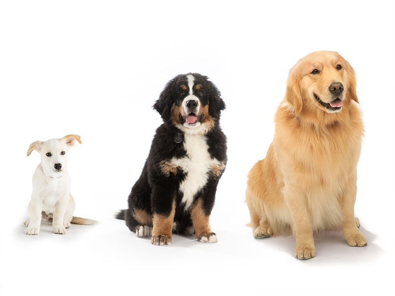 Images of a variety of dogs.