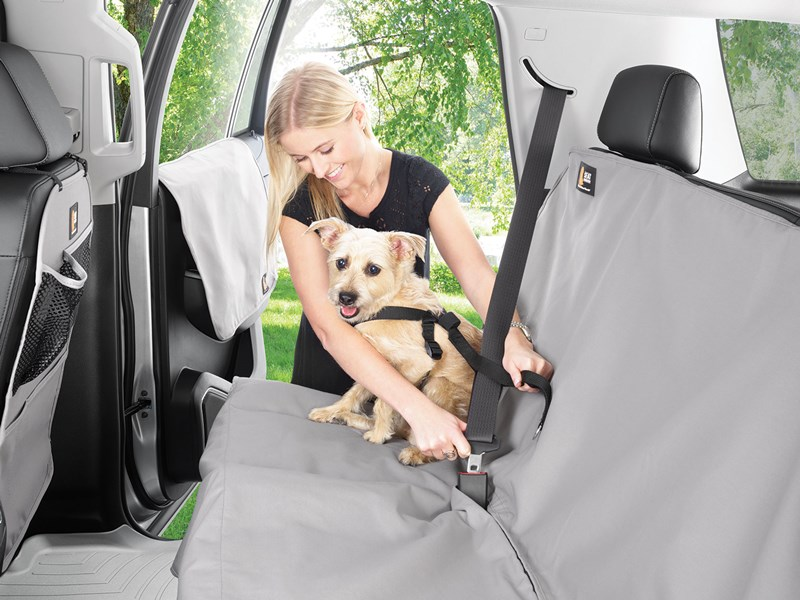 Woman securing dog in car with WeatherTech Pet Harness