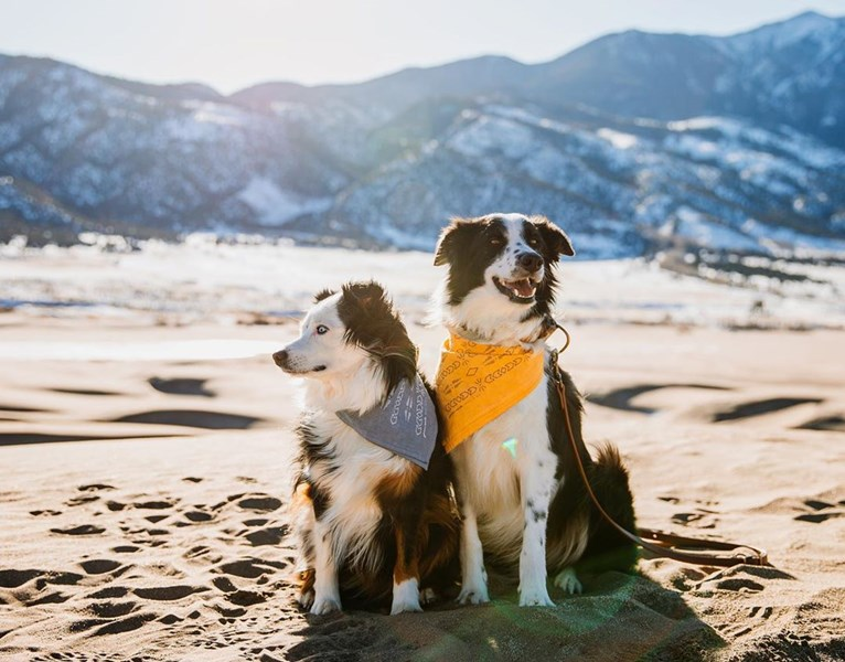 Nell and Winston on beach in front of mountains.
