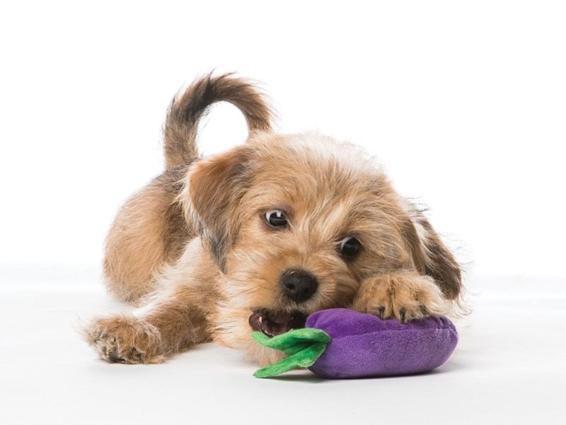 Dog playing with chew toy