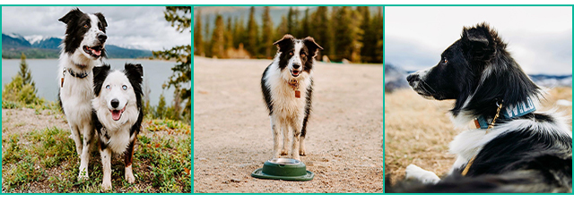 Collage of photos with Nell and Winston using pet feeding system outdoors.