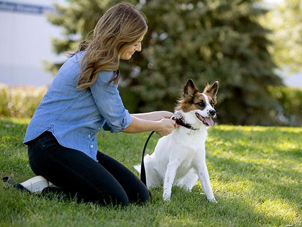 Dog Owner putting a leash on a dog