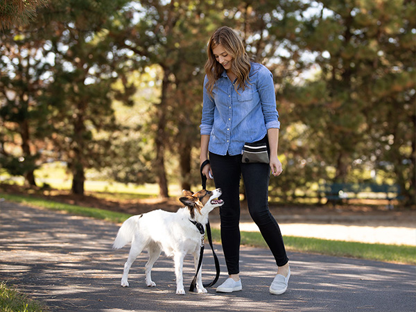 Dog Owner and dog walking in a park