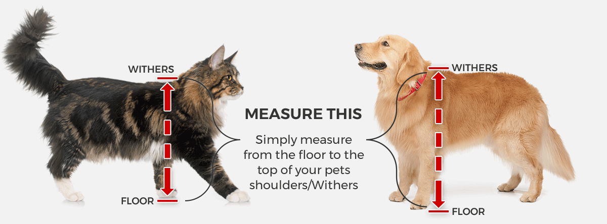 Simply measure from the floor to the top of you pets shoulders/withers