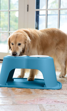 David MacNeil's golden retriever, 'Scout,' eating from a blue pet feeding system