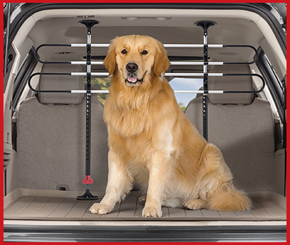 Photograph of a dog in the trunk with a Pet Barrier preventing him from jumping into the back seat.